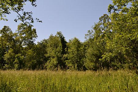 Piscitelli Field