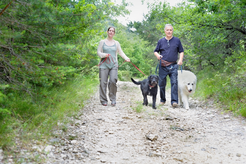 Guidance for Dog Walkers